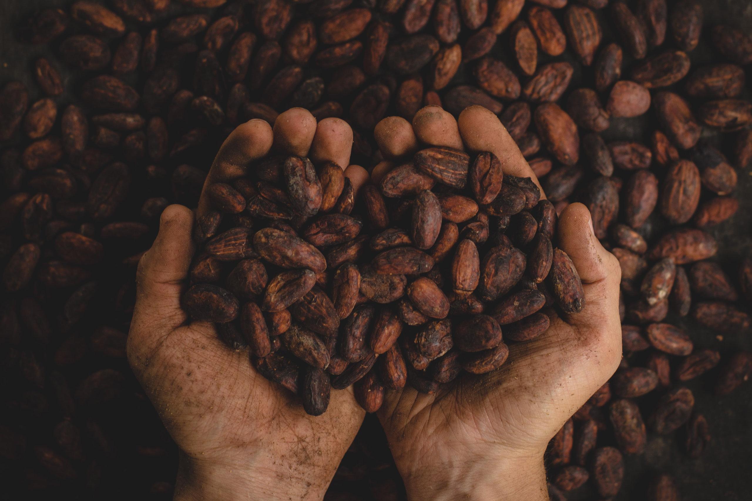 Rund 30% des verwendeten Kakaos soll in Zukunft auf eigenen Plantagen von Ritter Sport erwirtschaftet werden.